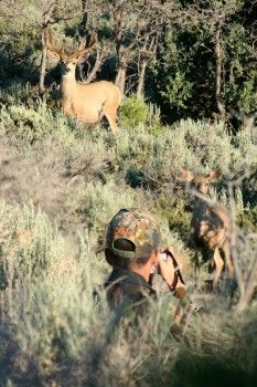 Deer hunting and camo, what can they see?
