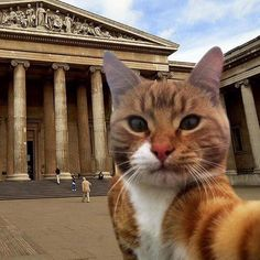 "Cat: ""I couldn't resist taking this #MuseumSelfie. I wanted you all to be fully aware: I am a very 'Cultured'' Cat!"""