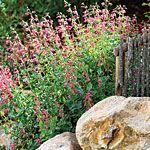 Native drought tolerant flowers.