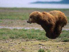 【画像】なんという浮遊感!動物たちが跳んだ瞬間を激写した写真25枚 - 小太郎ぶろぐ