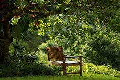 a bench in the forest - Google Search