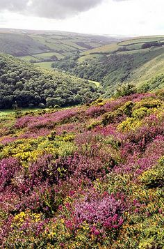 Exmoor. by Howard Somerville on Flickr