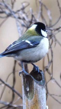 Most Beautiful Birds, Pretty Birds, Nature Pictures, Cute Pictures, Wild Birds, Birds 2, Cute Baby Cats, Bird Gif, Cute Pikachu