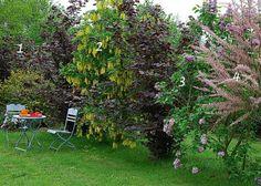 Haie libre et fleurie : des feuilles et des fleurs (lilas, cytise, noisetier, tamaris, cornus) - F. Marre - M. Marcat - Rustica