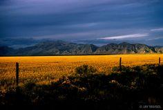 Fantastica, Blue Sky, Yellow Field by Jay Maisel