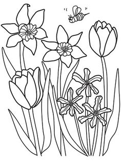 Printable Spring Coloring Pages: Daffodils and Tulips (via Parents.com)