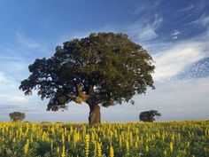 The Alentejo - Portugal's undiscovered Tuscany. Read one man's bike ride through this gorgeous countryside. For less energetic tourists we can take you there on a day tour of the region. http://www.your-lisbon-guide.com  http://www.independent.co.uk/travel/europe/portugal-one-man-on-a-bicycle-in-a-land-of-beauty-7742087.html