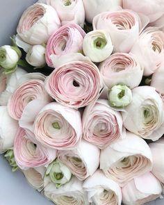 ranunculus and calla lily bouquet Ranunculus Wedding Bouquet, Ranunculus Flowers, Wedding Bouquets, Wedding Flowers, Lily Bouquet, White Ranunculus, Flowers Nature, Fresh Flowers, Pink Flowers