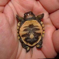 Cute Funny Animals, Cute Baby Animals, Animals And Pets, Cute Baby Turtles, Cute Reptiles, Tier Fotos, Mundo Animal, Animal Memes, Cat Memes