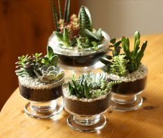 How to Make Mini Succulent and Cacti Gardens in 15 Min - Top Dreamer
