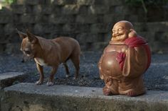 yard sale - Buddha cookie jar, chihuahua