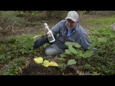 In the Garden with Doug Oster: Create a weed free garden, horizontal tom...
