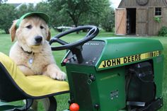 What could be better? A Golden and his John Deere.