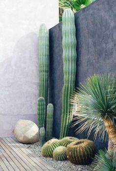▷ 1001 + fantastic decor ideas with outdoor succulents - Giant cactus near a modern wall, ball cactus, decorative gravel, stone - Decorative Gravel, Decoration Plante, Garden Care, Garden Tips, Garden Ideas, Cactus Flower, Cactus Cactus, Cactus Decor, Stone Cactus