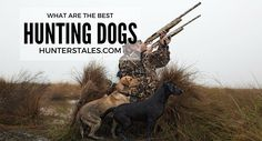 What Are The Best Type Of Hunting Dogs
