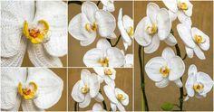 Crochet An Orchid - met video