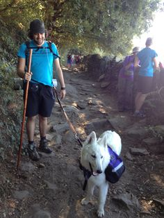 Four-legged pilgrim going on the Camino. - photo by Angelica Berrie