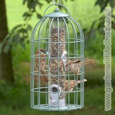 The Nuttery Feedsafe Squirrel Proof Seed Feeder - Ocean Green
