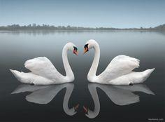 BeautifulReflectionPhotography_009