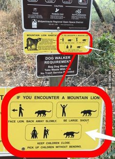 In case of mountain lion, offer your least favorite child as a sacrifice in order to save the others