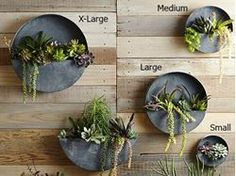 Show details for Orbea Circle Zinc Wall Planters