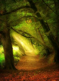 "Catherines Wood, England (looks like an ""enchanted forest"") Beautiful World, Beautiful Places, Beautiful Pictures, Beautiful Forest, Beautiful Scenery, All Nature, Amazing Nature, Pathways, Belle Photo"