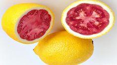 Lemato Fruit