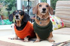 I love doxies in sweaters <3