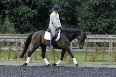 Handy exercise: teach your horse to work in a long and low outline