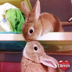 Bunny love for easter