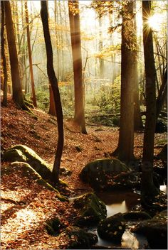 Karin Stein - lichter Wald