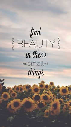 Find beauty in the small things                                                                                                                                                                                 More