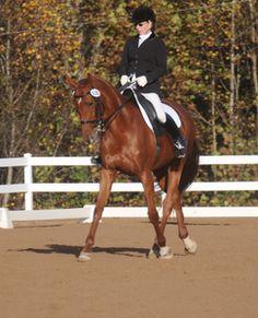Venus | Dressage Horses For Sale | DressageMarket.com
