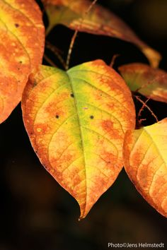 Colors of Fall│Jens Helmstedt Photography