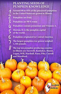 Plenty of Pumpkin Facts!!