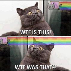 omg its nyan cat dude duuuuh. Best Cat Memes, Funny Cat Memes, Funny Cats, Funny Animals, Funny Humor, Drunk Humor, Nyan Cat, I Love Cats, Crazy Cats
