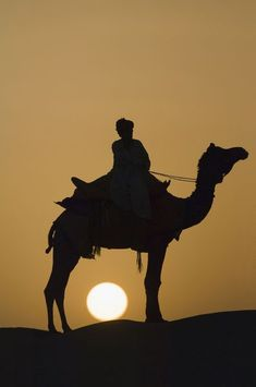 """""""Camel at sunset in the Thar desert, Rajasthan, India"""" Photography by Gabrielle Therin-Weise buy now as poster, art print and greeting card. Foto Picture, Camelus, Deserts Of The World, Desert Life, Arabian Nights, Rajasthan India, Silhouettes, Incredible India, Sunrise"""