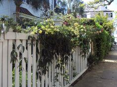 Charleston Style Gardens | antique art garden spring garden views of charleston south carolina