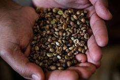 """Pesquisa indica mudança no consumo de embalagens de café - Notícias - Mercado - CaféPoint  Da redaçãoA pesquisa """"Avaliação de Embalagens e Métodos de Armazenamento para Cafés Especiais"""" coordenada pelo professor Flávio Meira BorémdaUniversidade Federal de Lavras(UFLA/MG) indica uma mudança no consumo de embalagens pela indústria cafeeira comprovando que é possível manter a qualidade dos grãos de café durante longos períodos de armazenamento com a embalagem de papel de alta barreira sendo a…"""