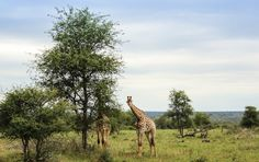 Kruger National Park's 10 best self-drives - Getaway Magazine Kruger National Park, National Parks, Self Driving, Africa Travel, South Africa, The Good Place, Safari, Road Trip, Wildlife