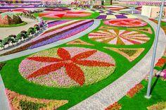Parece que no hay nada imposible...¡en Dubai!  Como encontrarnos con el jardín de flores naturales más grande del mundo.  Adornos con flores en forma de animales, recreando la bandera de los Emiratos Árabes o como un reloj. Además van cambiando a cada temporada para que puedas repetir tu visita las veces que quieras y nunca veas las mismas combinaciones.  ¡No dejes de viajar!