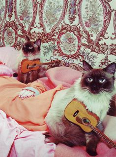 Ukelele playing kitties