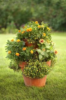 Cindy Dole Home Improvement Ideas and Answers: Fun and Inexpensive Plant Container Ideas