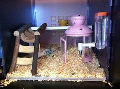 Hamster Home (Ikea)