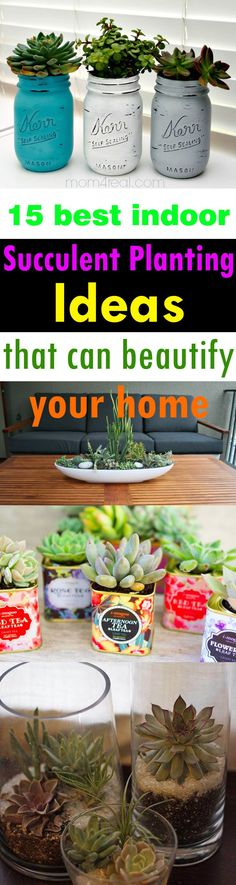 Growing succulents indoors can add a touch of beauty to your home. Also, they…