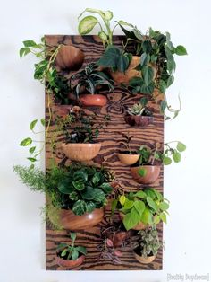 Living Wall Vertical Planter from Wooden Bowls {Reality Daydream} Living wall planter made from wood Indoor Succulent Planter, Indoor Planters, Diy Planters, Concrete Planters, Hanging Planters, Succulent Wall Diy, Succulent Terrarium, Succulents Garden, Living Wall Planter
