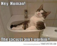 Hey human…