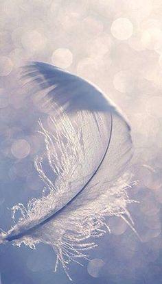 White Feather.