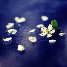 Η καληνύχτα που θα πω, θέλω να μυρίζει, σαν τη ψυχή μου, Που είναι γεμάτη, μ' άνοιξη και λουλούδια... Δεν θα την έλεγα ποτέ αν ήταν να μύριζε, σαν τις ψυχές των άλλων, που είναι γύρω μου... Γιατί οι ψυχές των άλλων, μυρίζουν, μόνο απελπισία...  © Mona Perises / 2014  #MonaPerises #spiritual #spirit #decryption #writer #author #soul #heart #love #dreams #poem #instagramer