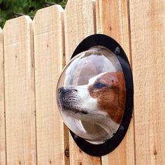 Dog peephole fence fence for dogs Soo cute!!
